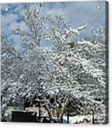 Brilliant Snow Coated Tree Acrylic Print
