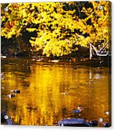 Brilliant Yellows Acrylic Print