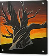Bristle Cone Pine At Dusk Acrylic Print