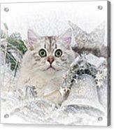 British Longhair Cat Christmas Time II Acrylic Print by Melanie Viola