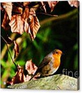British Nature Acrylic Print