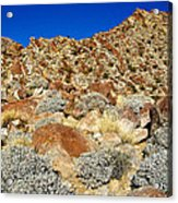 Brittlebush Leaves And Santa Rosa Mountains From Borrego Palm Canyon In Anza-borrego Desert Sp-ca Acrylic Print