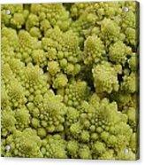Broccoli Heirloom Acrylic Print