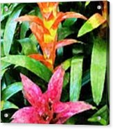 Bromalaid Beauties Acrylic Print