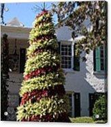 Bromelia Christmas Tree Acrylic Print