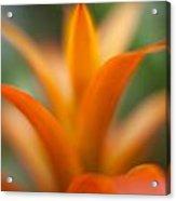 Bromeliad Flow Acrylic Print by Mike Reid