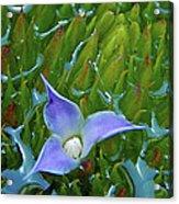 Bromeliad Pond Acrylic Print