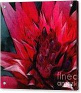Bromeliad Splendor Acrylic Print