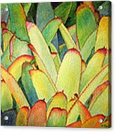 Bromeliads I Acrylic Print