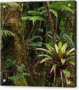 Bromeliads Of The Clouds Acrylic Print