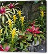 Bromeliads Acrylic Print