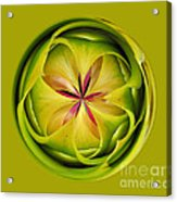 Bromiliad Orb Acrylic Print