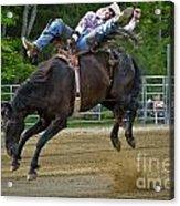 Bronco Cowboy Acrylic Print
