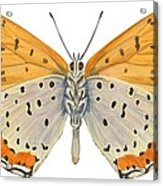Bronze Copper Butterfly Acrylic Print