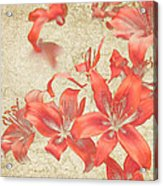 Bronze Lily Grunge Acrylic Print by Lesley Rigg