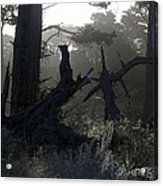 Brooding Forest Acrylic Print
