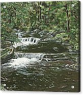 Brook In Spruceton Acrylic Print