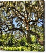 Brookgreen Gardens Acrylic Print