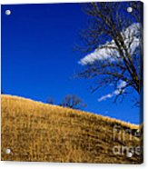 Broomsedge On Hill Acrylic Print