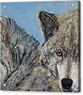 Brother And Sister Wolves Acrylic Print