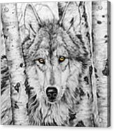 Brother Wolf Acrylic Print