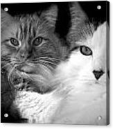 Brothers For Life Acrylic Print