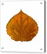 Brown And Orange Aspen Leaf 1 Acrylic Print