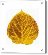 Brown And Yellow Aspen Leaf 2 Acrylic Print