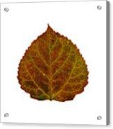 Brown Aspen Leaf 2 Acrylic Print