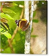 Brown Butterfly 2 Acrylic Print