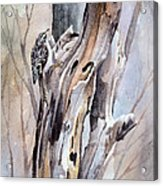 Brown Creeper Acrylic Print
