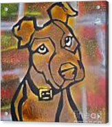 Brown Dog Acrylic Print