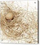 Brown Egg In Bird Nest Sepia Acrylic Print