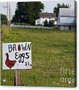 Brown Eggs Acrylic Print