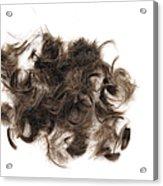 Brown Hair White Background Acrylic Print