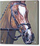 Brown Horse Acrylic Print