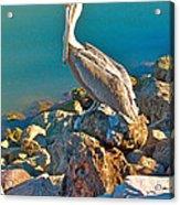 Brown Pelican In San Carlos-sonora Acrylic Print