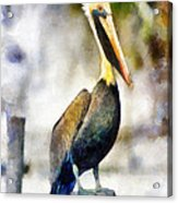 Brown Pelican Acrylic Print by Lester Phipps