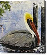 Brown Pelican Revisited Acrylic Print