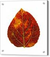 Brown Red And Yellow Aspen Leaf 1 Acrylic Print