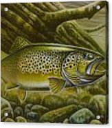 Brown Trout Log Acrylic Print by Jon Q Wright
