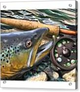 Brown Trout Sunset Acrylic Print by Craig Tinder