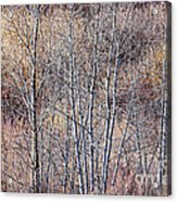 Brown Winter Forest With Bare Trees Acrylic Print