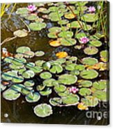 Bruges Lily Pond Acrylic Print by Carol Groenen