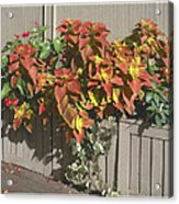 Bryant Park In September 3 Acrylic Print by Muriel Levison Goodwin