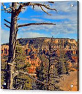 Bryce Canyon Cliff Tree Acrylic Print
