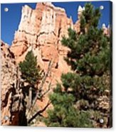 Bryce Canyon Fins Acrylic Print