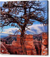 Bryce Canyon Middle Tree Acrylic Print