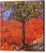 Bryce Canyon National Park Utah Acrylic Print