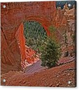 Bryce Canyon Natural Bridge And Tree Acrylic Print